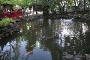 富岡八幡宮 弁天池